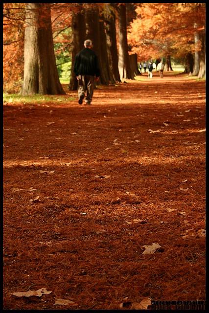 Outono em El Prato