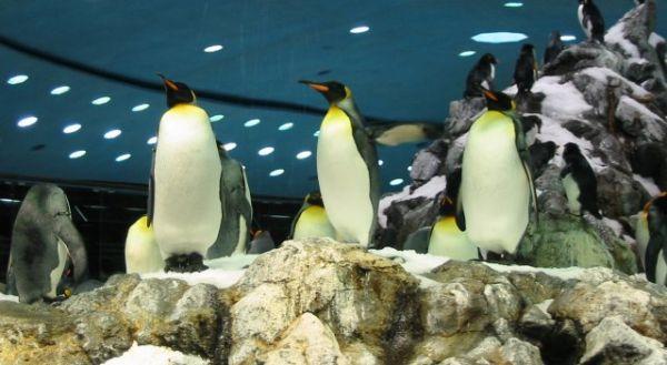 Pinguins no Loro Parque, em Tenerife, Espanha